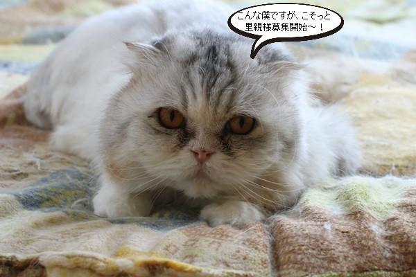 里親様募集開始してます、保護猫スコちゃん_e0151545_20502060.jpg