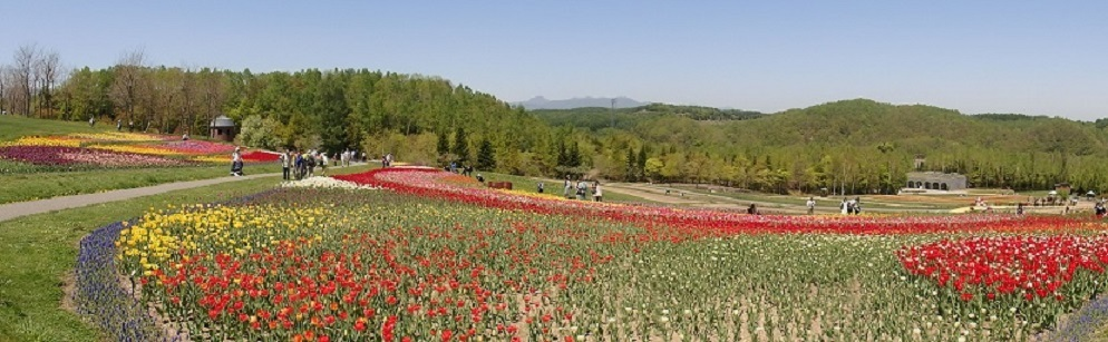 滝野すずらん丘陵公園 「チューリップ」 満開です。_f0362073_17255579.jpg