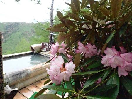 花に囲まれて_e0120896_07304027.jpg