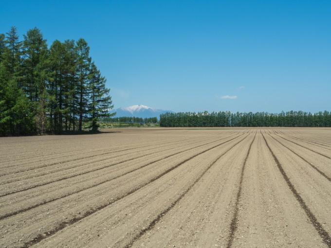衣替え中のエゾリス君と真っ平な畑の先の十勝幌尻岳。_f0276498_22364578.jpg