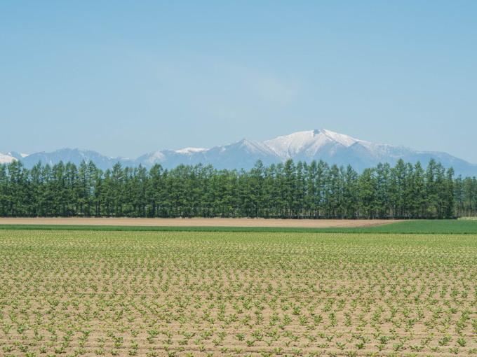 衣替え中のエゾリス君と真っ平な畑の先の十勝幌尻岳。_f0276498_22413998.jpg