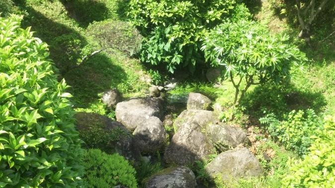 涌きあがる水前寺公園の魅力_e0222708_14550072.jpg