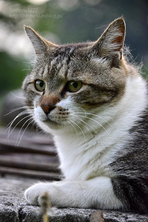 2018.5.17 我が家の猫~とらたろう、まお、ましゅう【Cats】_f0250322_21141261.jpg