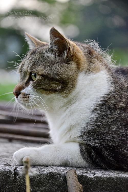 2018.5.17 我が家の猫~とらたろう、まお、ましゅう【Cats】_f0250322_21141729.jpg