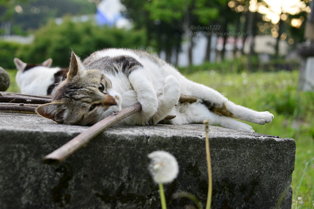 2018.5.17 我が家の猫~とらたろう、まお、ましゅう【Cats】_f0250322_21142298.jpg