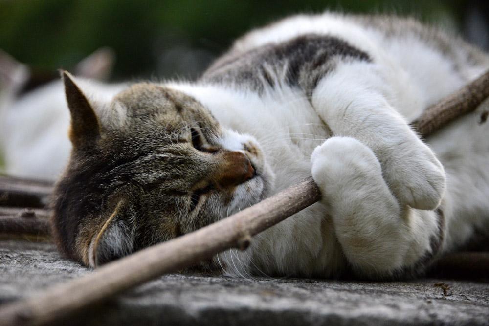 2018.5.17 我が家の猫~とらたろう、まお、ましゅう【Cats】_f0250322_21142880.jpg