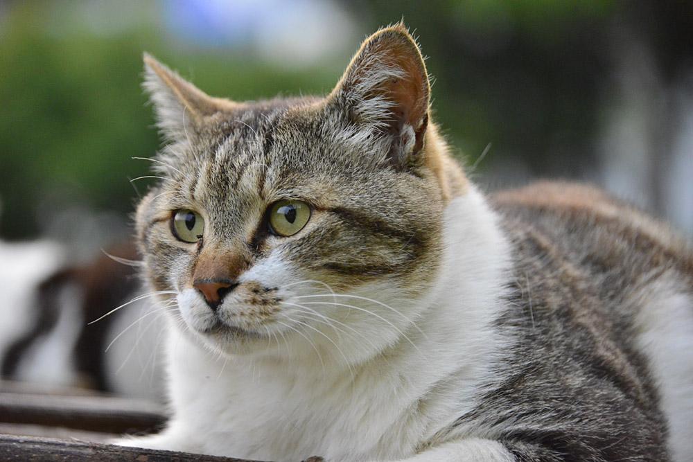 2018.5.17 我が家の猫~とらたろう、まお、ましゅう【Cats】_f0250322_21143216.jpg