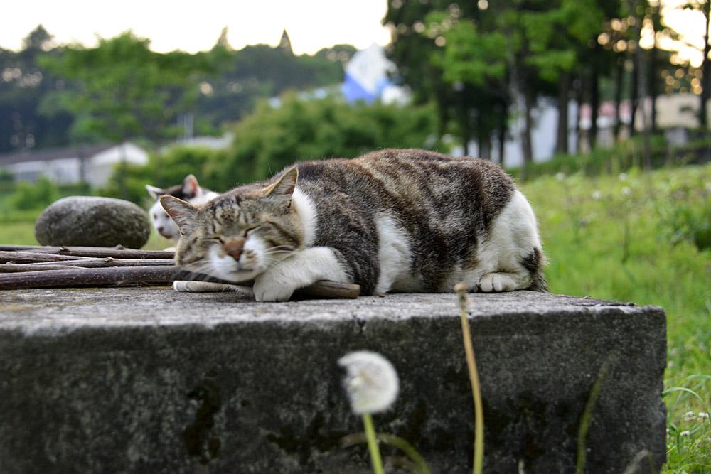 2018.5.17 我が家の猫~とらたろう、まお、ましゅう【Cats】_f0250322_2114377.jpg