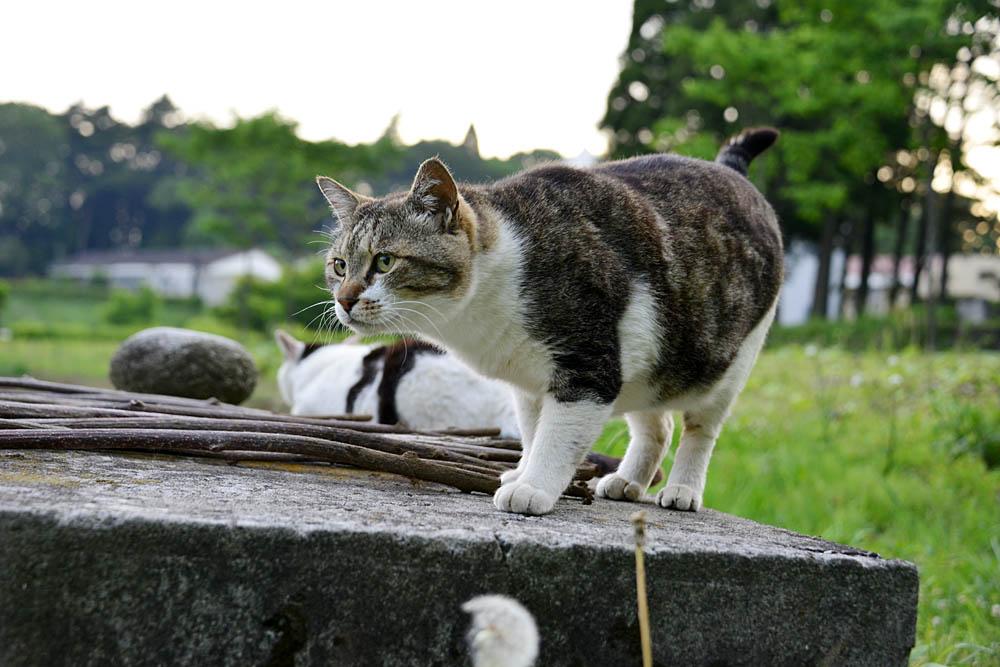 2018.5.17 我が家の猫~とらたろう、まお、ましゅう【Cats】_f0250322_21144181.jpg