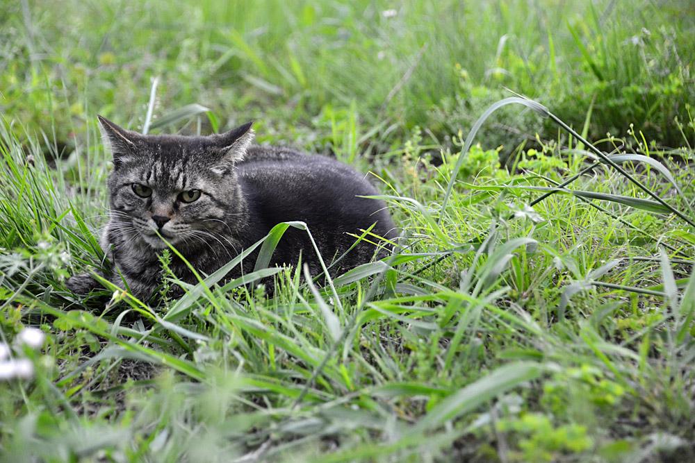 2018.5.17 我が家の猫~とらたろう、まお、ましゅう【Cats】_f0250322_21144781.jpg