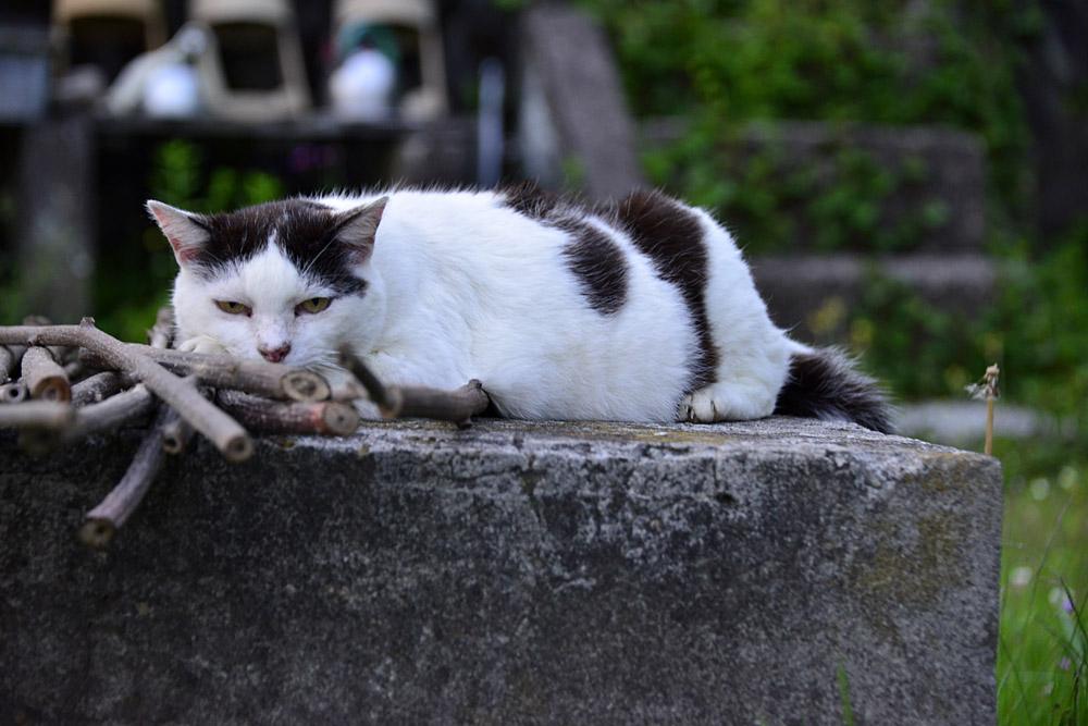 2018.5.17 我が家の猫~とらたろう、まお、ましゅう【Cats】_f0250322_21145231.jpg