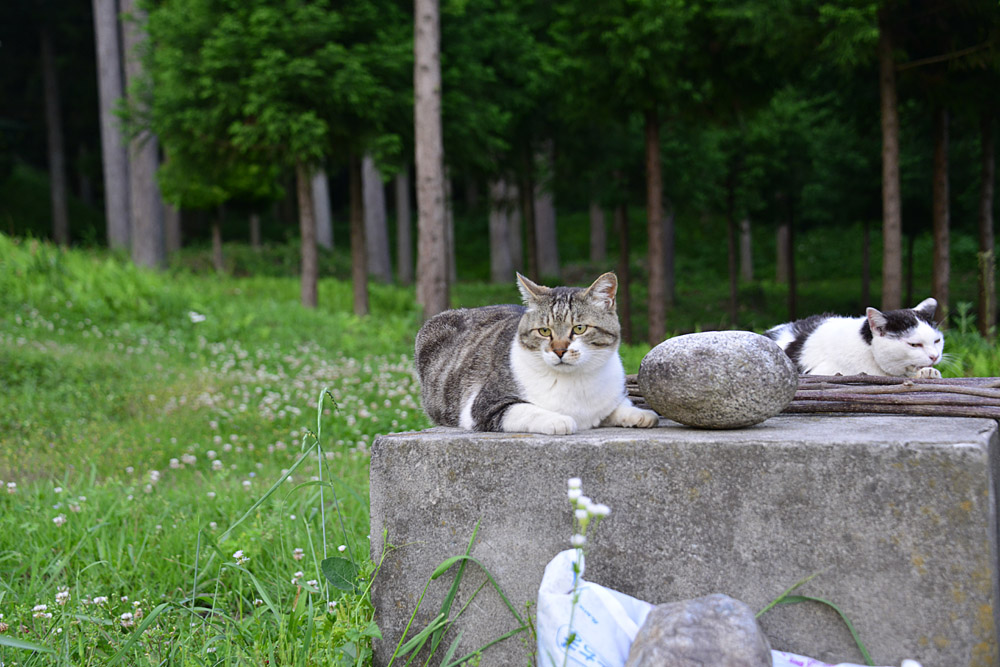 2018.5.17 我が家の猫~とらたろう、まお、ましゅう【Cats】_f0250322_21145885.jpg