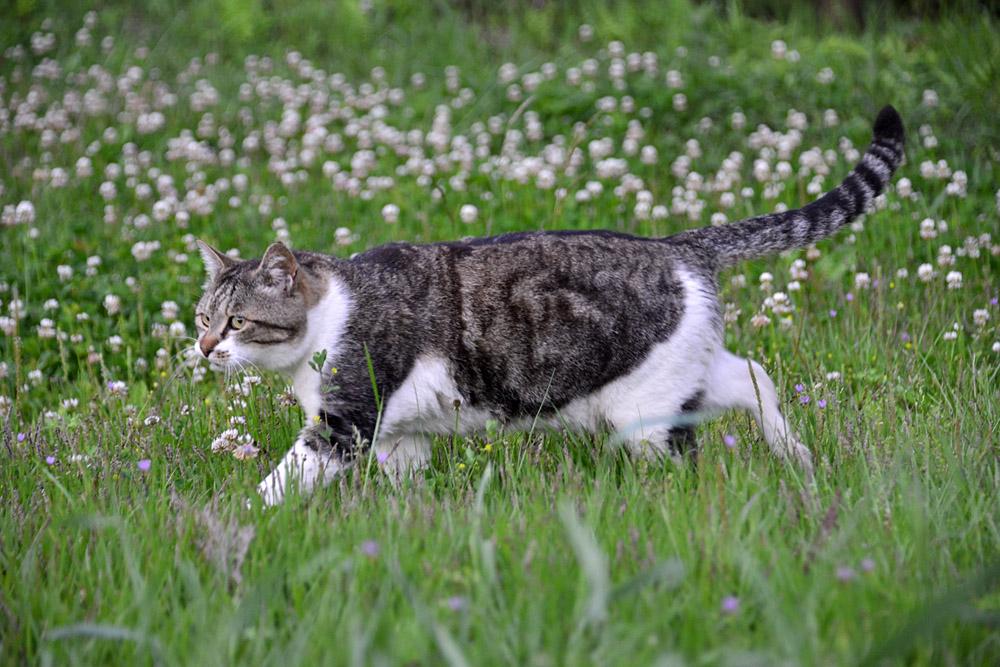 2018.5.17 我が家の猫~とらたろう、まお、ましゅう【Cats】_f0250322_21151249.jpg