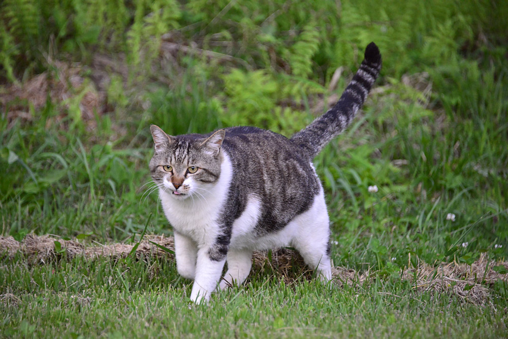 2018.5.17 我が家の猫~とらたろう、まお、ましゅう【Cats】_f0250322_21151777.jpg