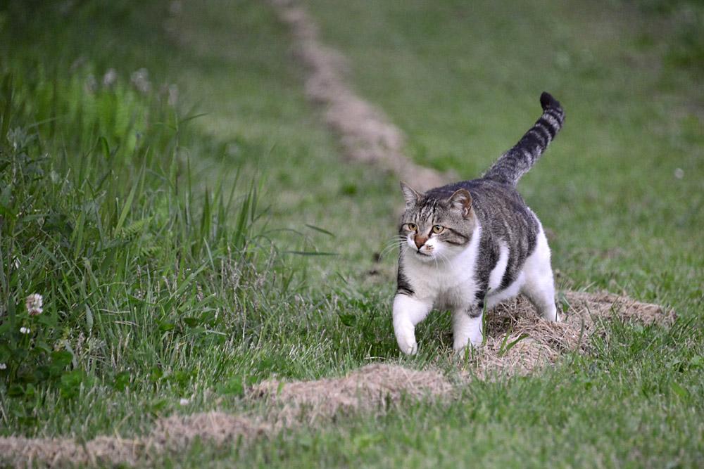 2018.5.17 我が家の猫~とらたろう、まお、ましゅう【Cats】_f0250322_21152393.jpg