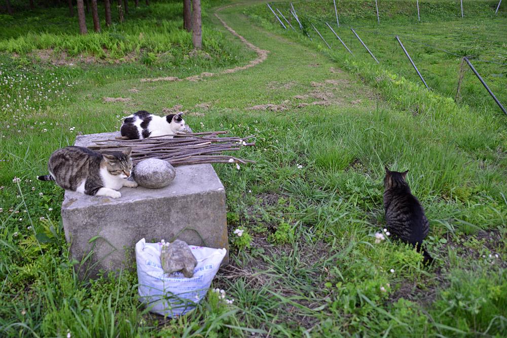 2018.5.17 我が家の猫~とらたろう、まお、ましゅう【Cats】_f0250322_2115777.jpg