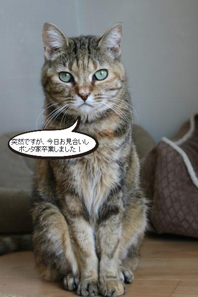 ご縁は突然に、保護猫さん卒業です_e0151545_20280393.jpg