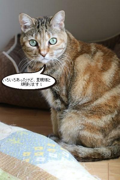 ご縁は突然に、保護猫さん卒業です_e0151545_20281831.jpg