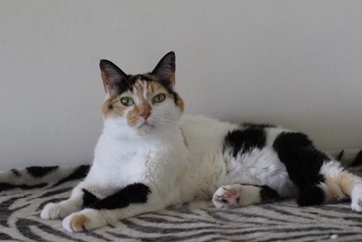 ご縁は突然に、保護猫さん卒業です_e0151545_20290247.jpg