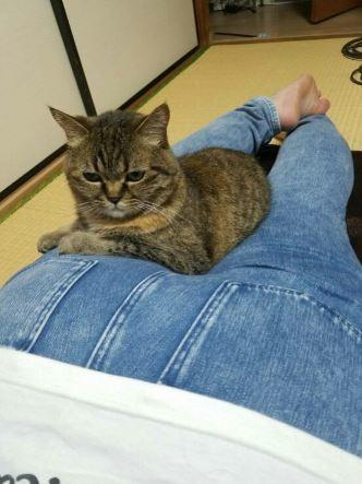 ご縁は突然に、保護猫さん卒業です_e0151545_20370758.jpg
