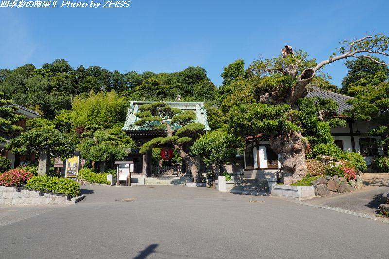 鎌倉「長谷寺」へ_d0358854_20400797.jpg