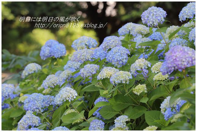 f0361079_19545402.jpg