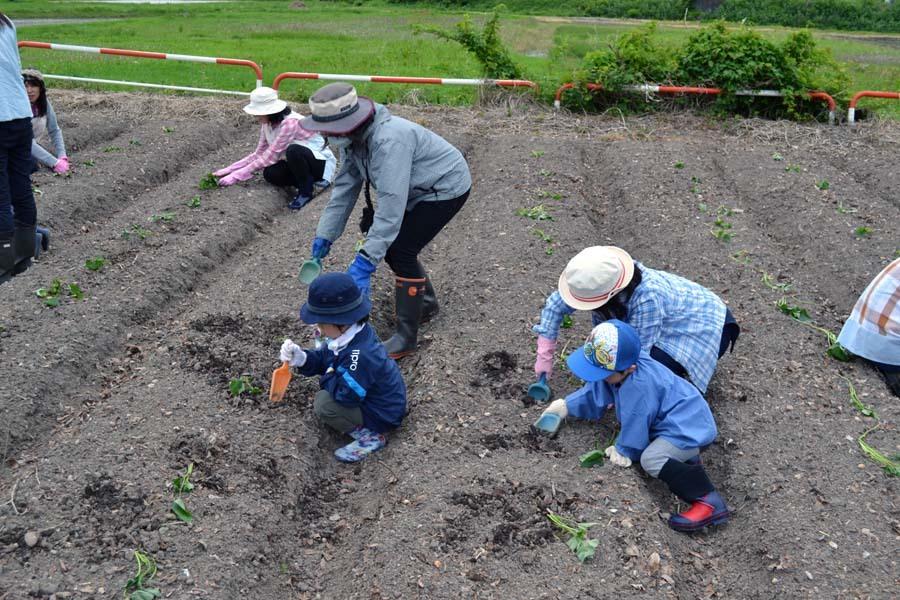 さつま芋の苗を植えました。_d0353789_09175612.jpg