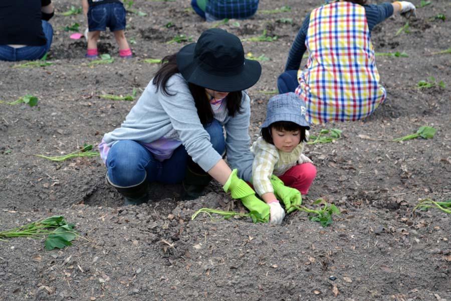 さつま芋の苗を植えました。_d0353789_09180419.jpg