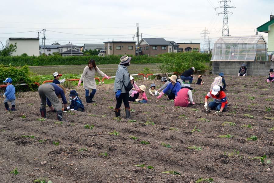 さつま芋の苗を植えました。_d0353789_09181350.jpg