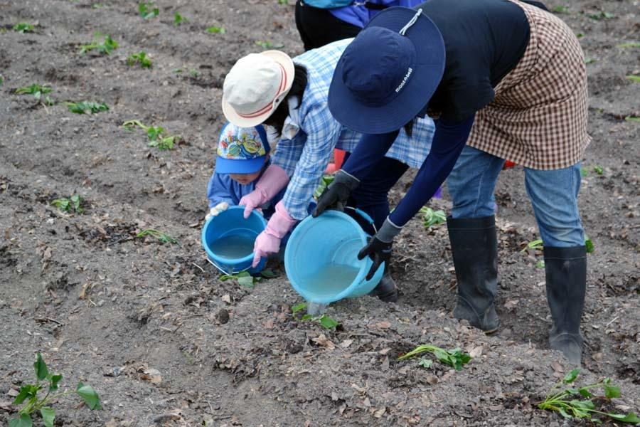 さつま芋の苗を植えました。_d0353789_09182145.jpg