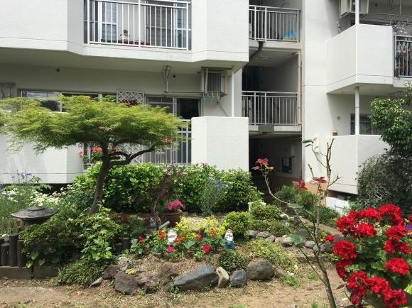 ご近所さんぽ 団地のお庭_d0348118_15335954.jpeg