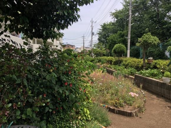 ご近所さんぽ 団地のお庭_d0348118_15343781.jpeg