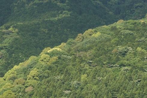 五月雨に和らぐ山肌_f0055131_21063016.jpg