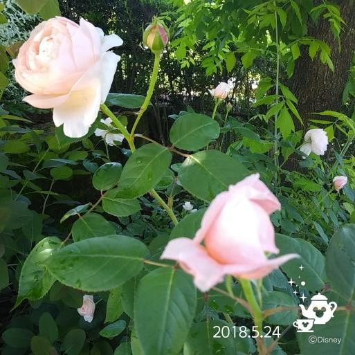 f0262033_10453979.jpg