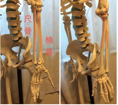 手首が辛い方、骨盤を整えてみませんか? 〜ある日の施術より〜_e0073240_16062655.jpg