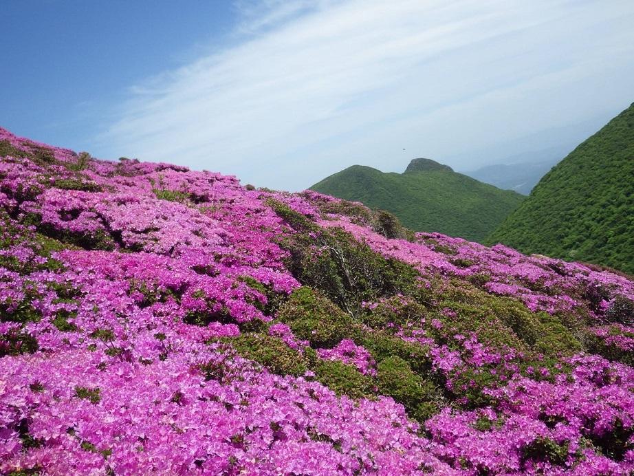 平治岳のミヤマキリシマ_e0164643_19595330.jpg