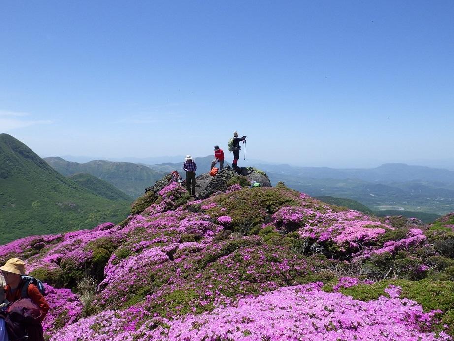 平治岳のミヤマキリシマ_e0164643_20001844.jpg
