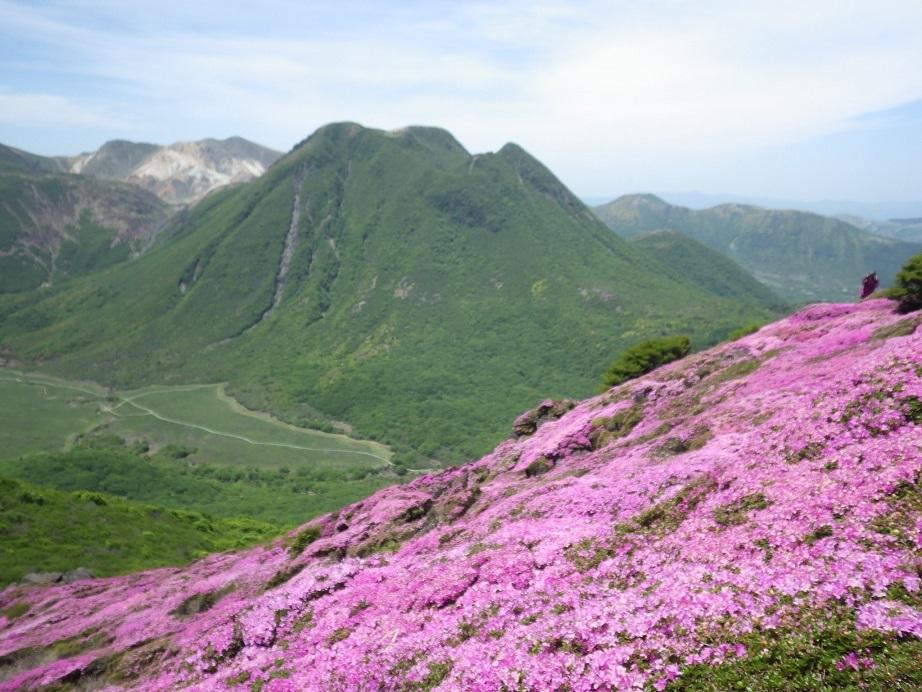 平治岳のミヤマキリシマ_e0164643_20003396.jpg