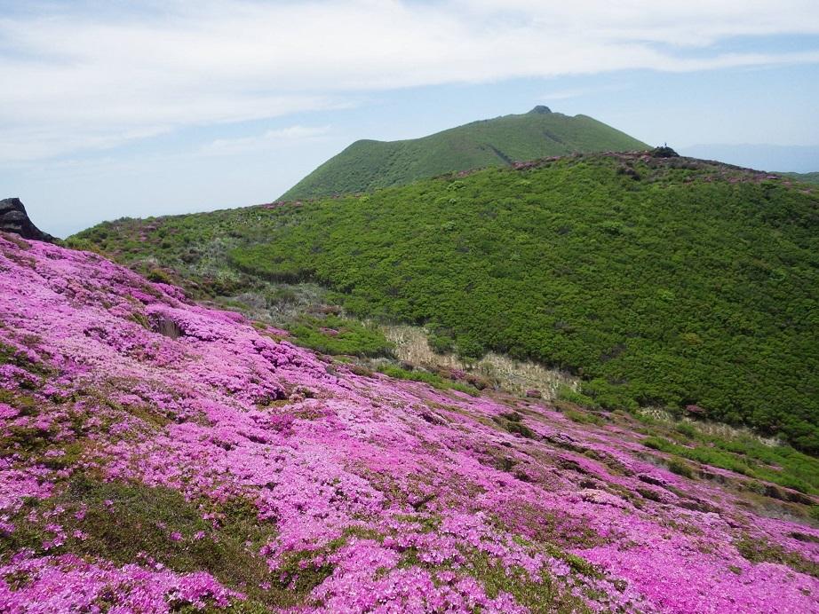 平治岳のミヤマキリシマ_e0164643_20015039.jpg