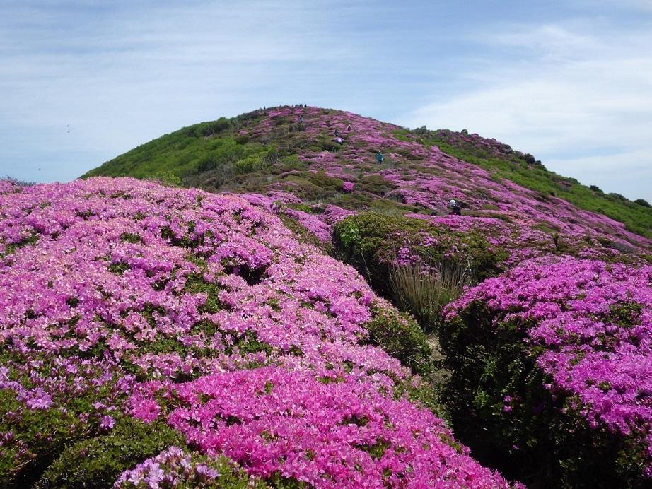 平治岳のミヤマキリシマ_e0164643_20021205.jpg