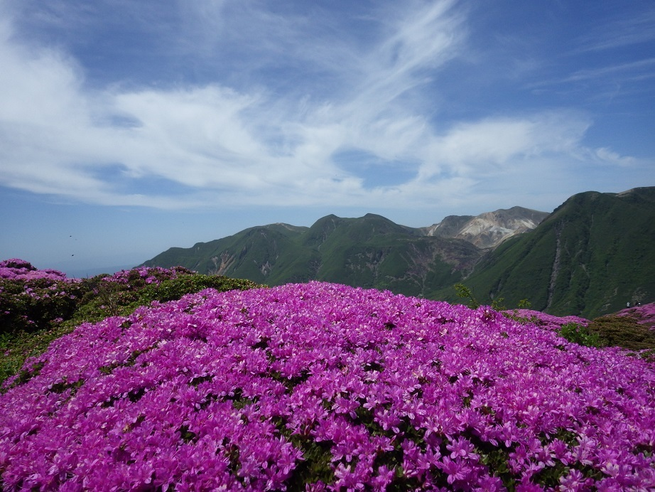 平治岳のミヤマキリシマ_e0164643_20023064.jpg