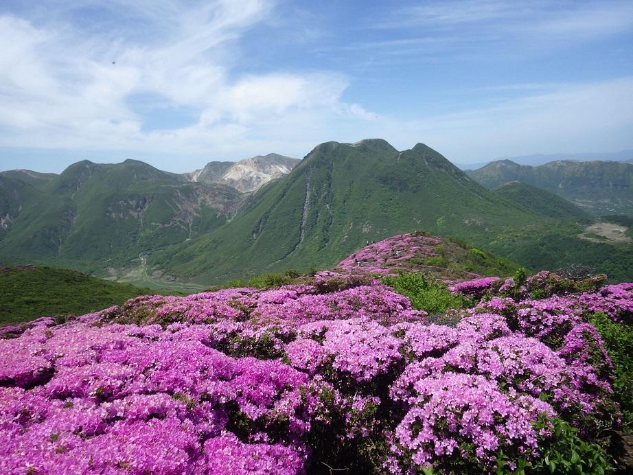 平治岳のミヤマキリシマ_e0164643_20023833.jpg
