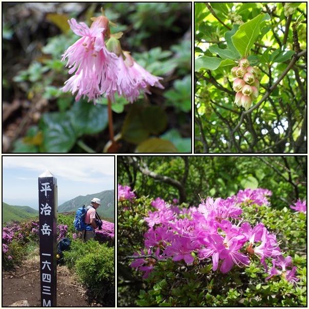 平治岳のミヤマキリシマ_e0164643_20024414.jpg