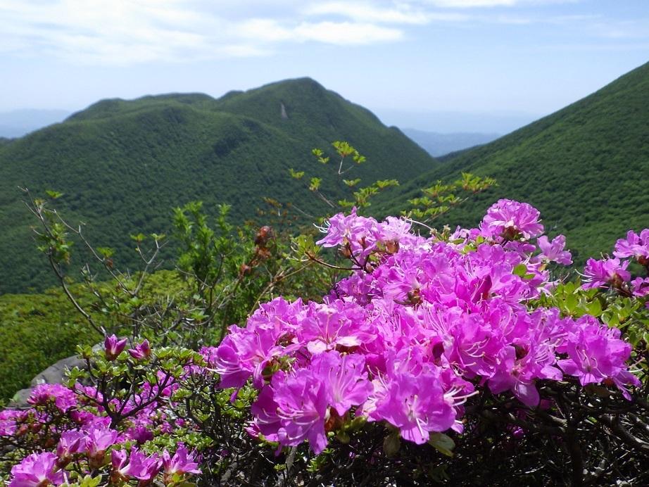 平治岳のミヤマキリシマ_e0164643_20025784.jpg