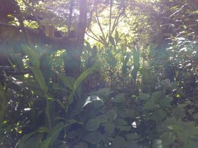 小学生の田植え、裏の草刈り(古民家)_c0330749_09132287.jpg