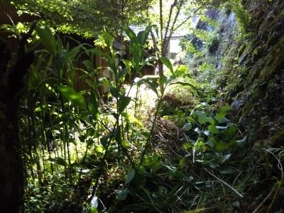 小学生の田植え、裏の草刈り(古民家)_c0330749_09170897.jpg