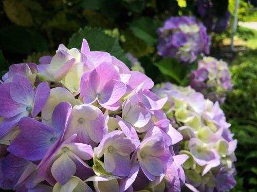 ブログを更新しました『初夏シャワー』_e0071652_10111413.jpg