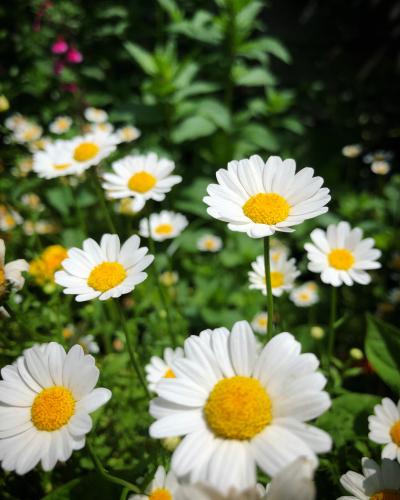 ブログを更新しました『初夏シャワー』_e0071652_10130258.jpg