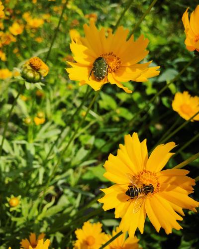 ブログを更新しました『初夏シャワー』_e0071652_10134420.jpg