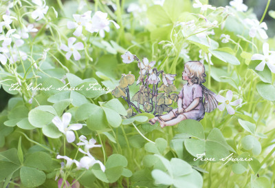 THE WOOD-SORREL FAIRY_a0252678_07175164.jpg